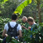 Wanted to know where coffee comes from? Find out on a guided tour and explore the beautiful landscape of Copan